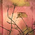 The Weeds by Tara Turner