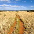 The Westward Trail by David Lee Thompson