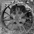 The Wheel by Lorraine Louwerse