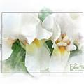 The Whispering Irises by Jack Ferlise