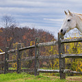 The White Horse by Rima Biswas