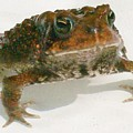 The Whole Toad by Barbara S Nickerson