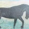 The Wild Stallion by Glenda Crigger