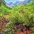 The Wildflowers Of Lundy Canyon by Lynn Bauer