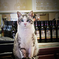 The Winery Cat by Rebecca Samler