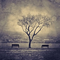 The Winter And The Benches by Tara Turner