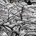 The Winter Has Arrived by Valerie Ornstein