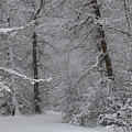 The Winter Path by DeeLon Merritt