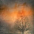 The Winter Still by Tara Turner