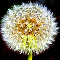 The Wish by Joseph Gillette