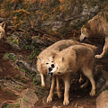 The Wolf Pack by Lori Deiter
