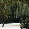 The Wollman Rink by Christopher Kirby