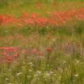 The Wonders Of Spring by Carolyn Fletcher