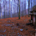 The Wood A La Magritte - Il Bosco A La Magritte by Enrico Pelos