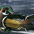 The Wood Duck by Mary Tuomi