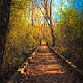 The Wooden Trail by Daniel Eskridge