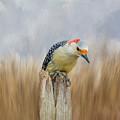 The Woodpecker by Cathy Kovarik