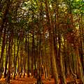 The Woods by John Hartman