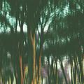 The Woods by Karen Black