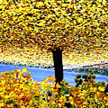 The Yellow Ceiling by Richard  Hubal