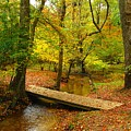 There Is Peace - Allaire State Park by Angie Tirado