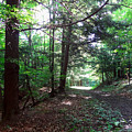 These Woods by Lorraine Baum