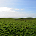 Thick Grass Field Abutting The Cliff's Of Moher In Ireland by DejaVu Designs
