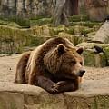 Thinker Bear by Monica Costa