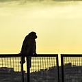 Thinking Monkey by Freepassenger By Ozzy CG