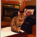 Thinking Of You - Bengal Cat by Barbara Griffin