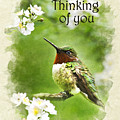 Thinking Of You Hummingbird Flora Fauna Greeting Card by Christina Rollo