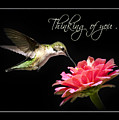 Thinking Of You Hummingbird Greeting Card by Christina Rollo