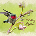 Thinking Of You Hummingbird Wing And A Prayer Greeting Card by Christina Rollo