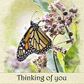 Thinking Of You Monarch Butterfly Greeting Card by Christina Rollo