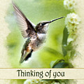 Thinking Of You Peaceful Love Hummingbird Greeting Card by Christina Rollo
