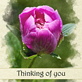 Thinking Of You Pink Peony Flower Greeting Card by Christina Rollo