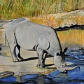 Thirsty Rhino by Caroline Street