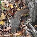 Thirsty Squirrel by Belinda Stucki