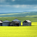 This Is Alberta No.15 - Prairie Barns by Paul W Sharpe Aka Wizard of Wonders