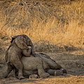 This Is Namibia No.  4 - Come On Bro I Wanna Play by Paul W Sharpe Aka Wizard of Wonders