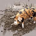 This Little Piggy by Mindy Newman
