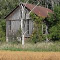 This Old Barn by Bjorn Sjogren