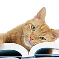 This Tabby Cat Loves Books  by Sheila Fitzgerald