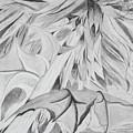 Thistle by Stella Sherman