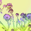 Thistles Under The Sun by Ian  MacDonald