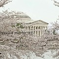 Thomas Jefferson Memorial 9576 by Captain Debbie Ritter