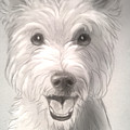 Thor The Westie by Shaza D