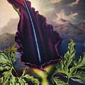 Thornton: Dragon Arum by Granger