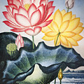 Thornton: Lotus Flower by Granger