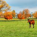 Thoroughbred In Fall by Sam Davis Johnson